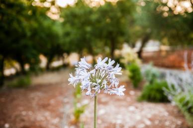 I fiori e la natura nel boschetto di Tre Casiedde