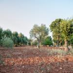Alberi, terra rossa e aria pulita: il meglio della Puglia da Tre Casiedde