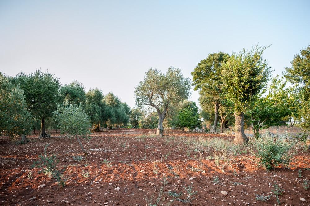 La terra, gli alberi, la natura: una splendida cartolina pugliese