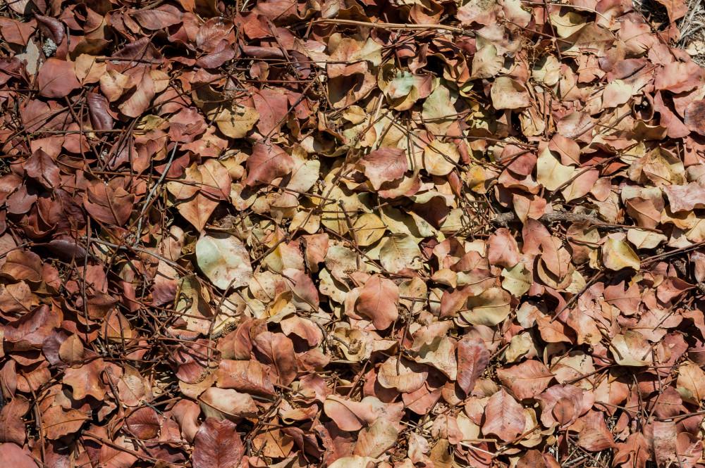 Un prato di foglie nel boschetto di Tre Casiedde