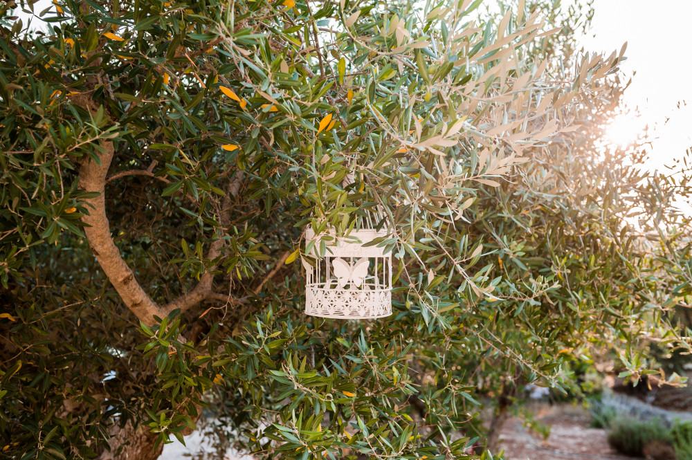 La vegetezione di Tre Casiedde: un ulivo pugliese
