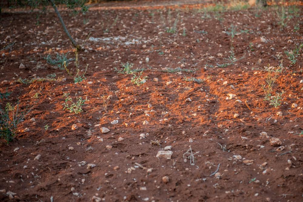 La terra rossa pugliese nel boschetto di Tre Casiedde