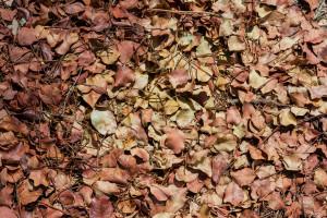 Foglie secche nel boschetto di Tre Casiedde